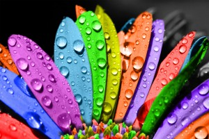 fiori-dai-mille-colori